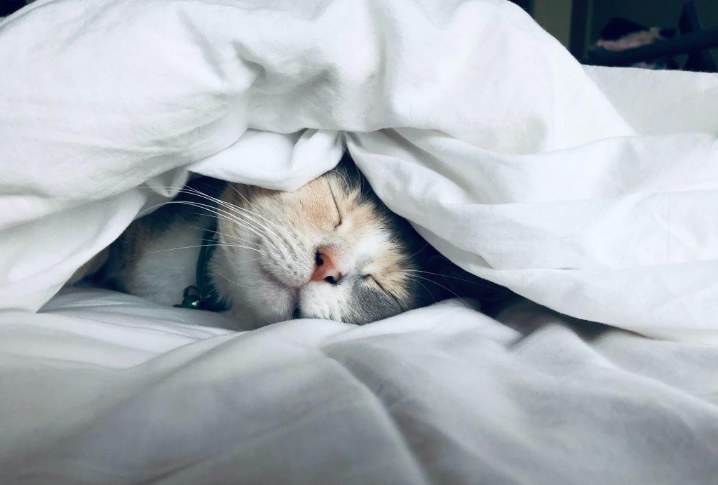 cute kitten under covers
