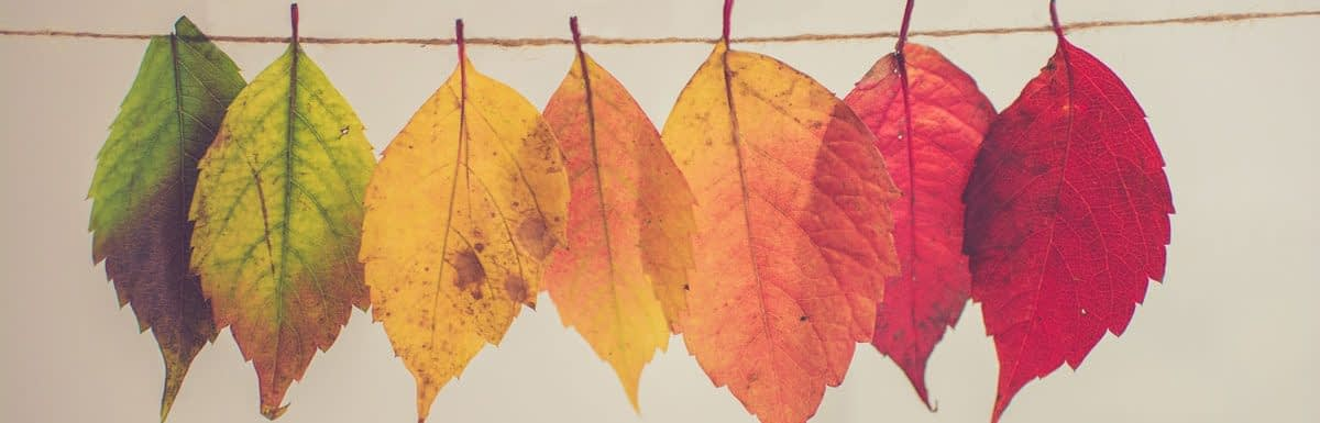 Single Fall Leaves on a String
