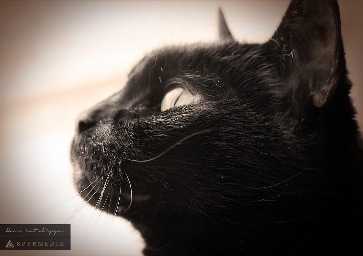 black cat eye focus