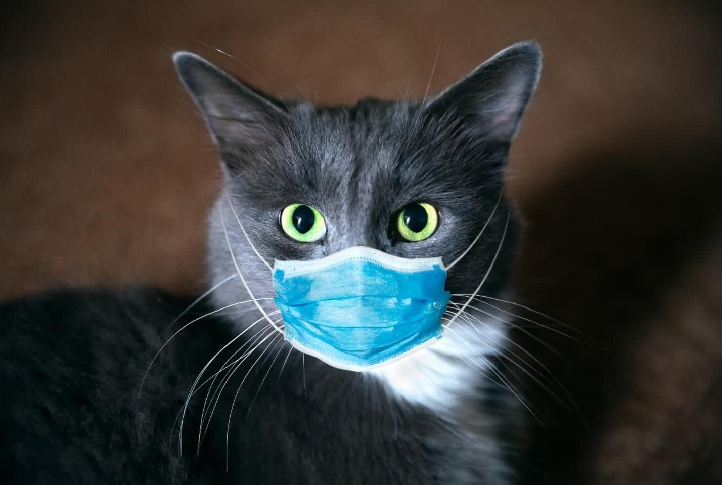 black cat wearing mask