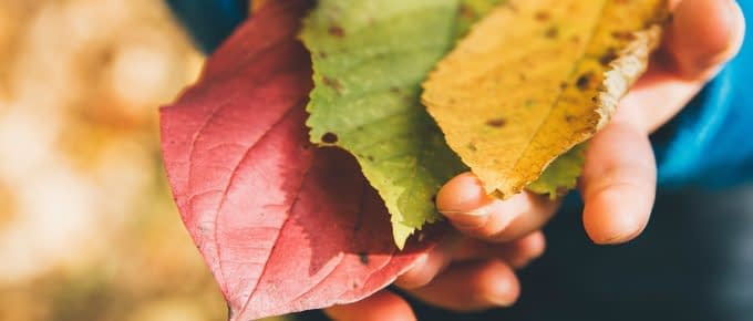 fall leaves in a hand